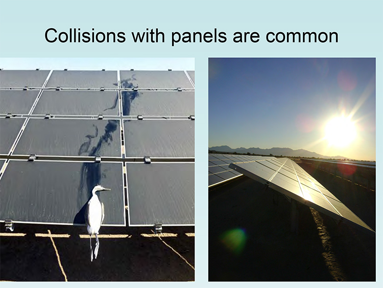 Avian solar mortality