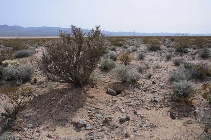 Desert Tortoise Habitat Model
