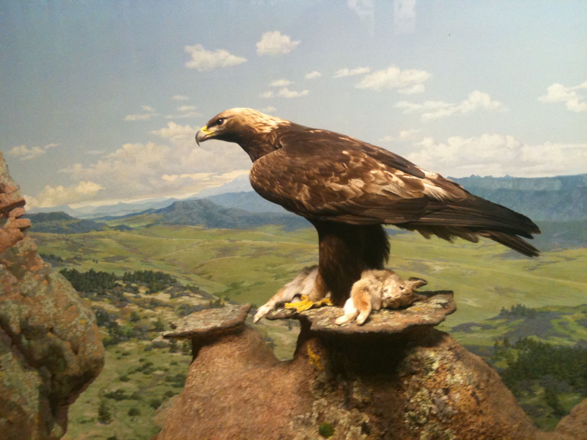 Golden Eagles And Renewable Energy